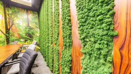 Rośliny do biura - jak wpłynąć na wydajność pracowników za
